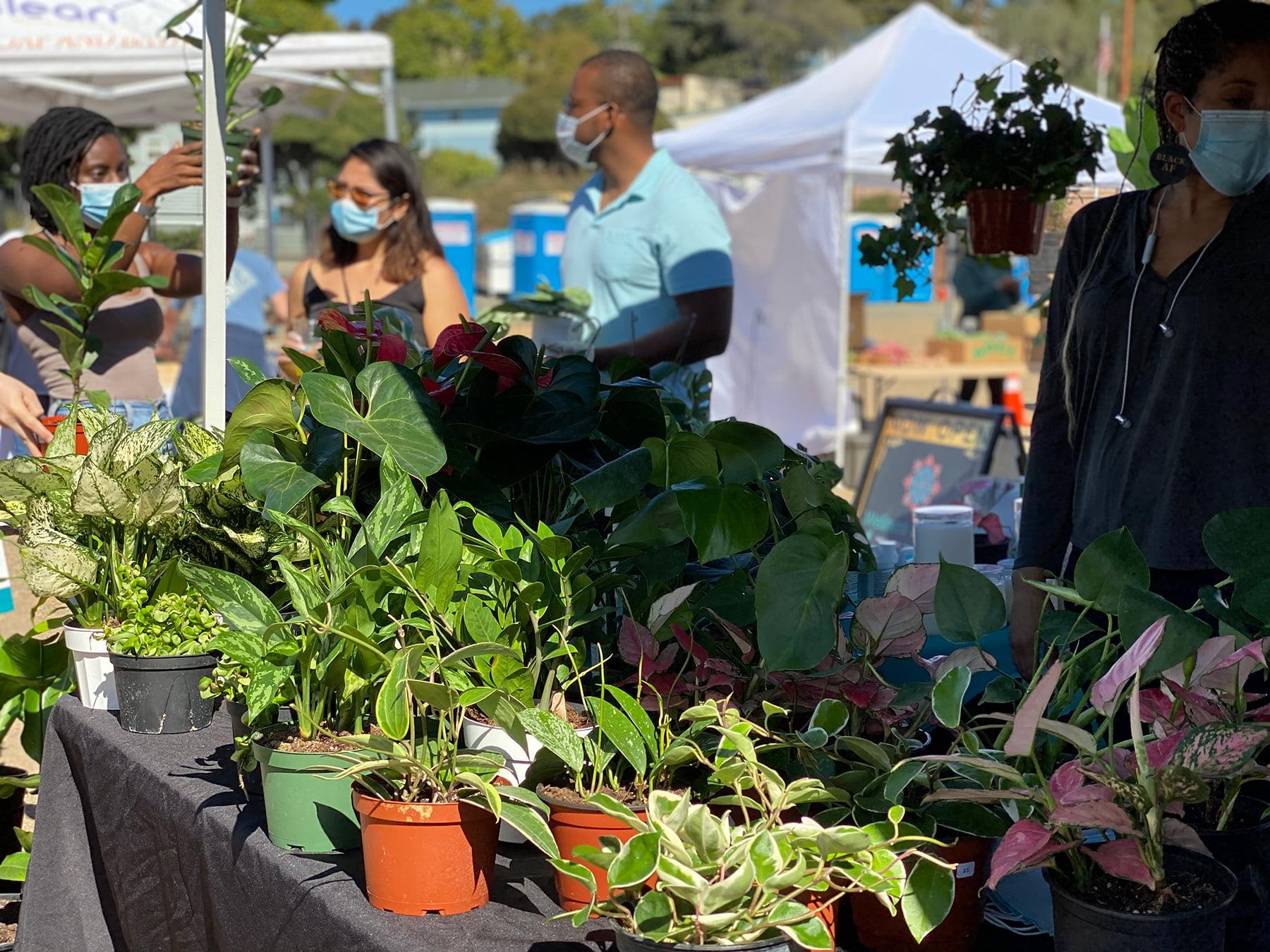 black cultural zone farmer's market